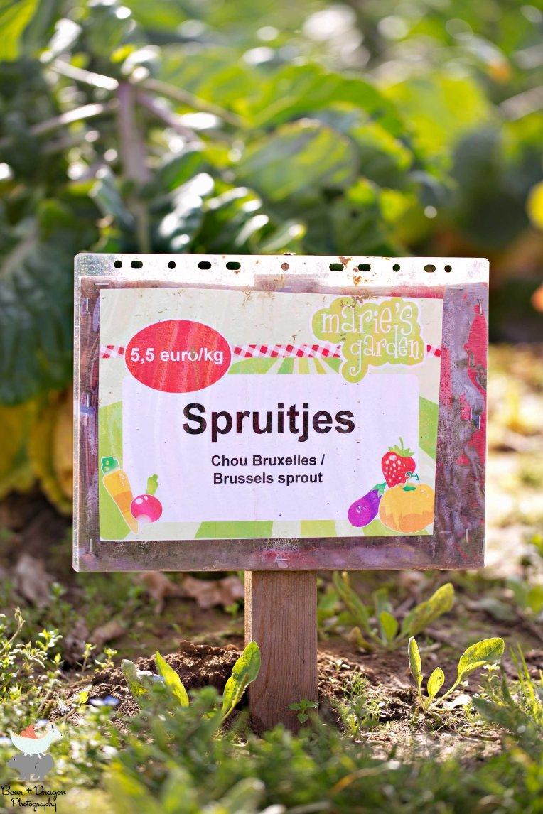 Marie's Garden-8