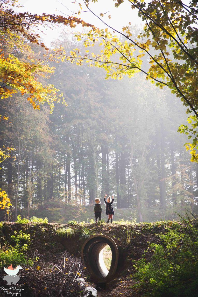 forest-blog-6