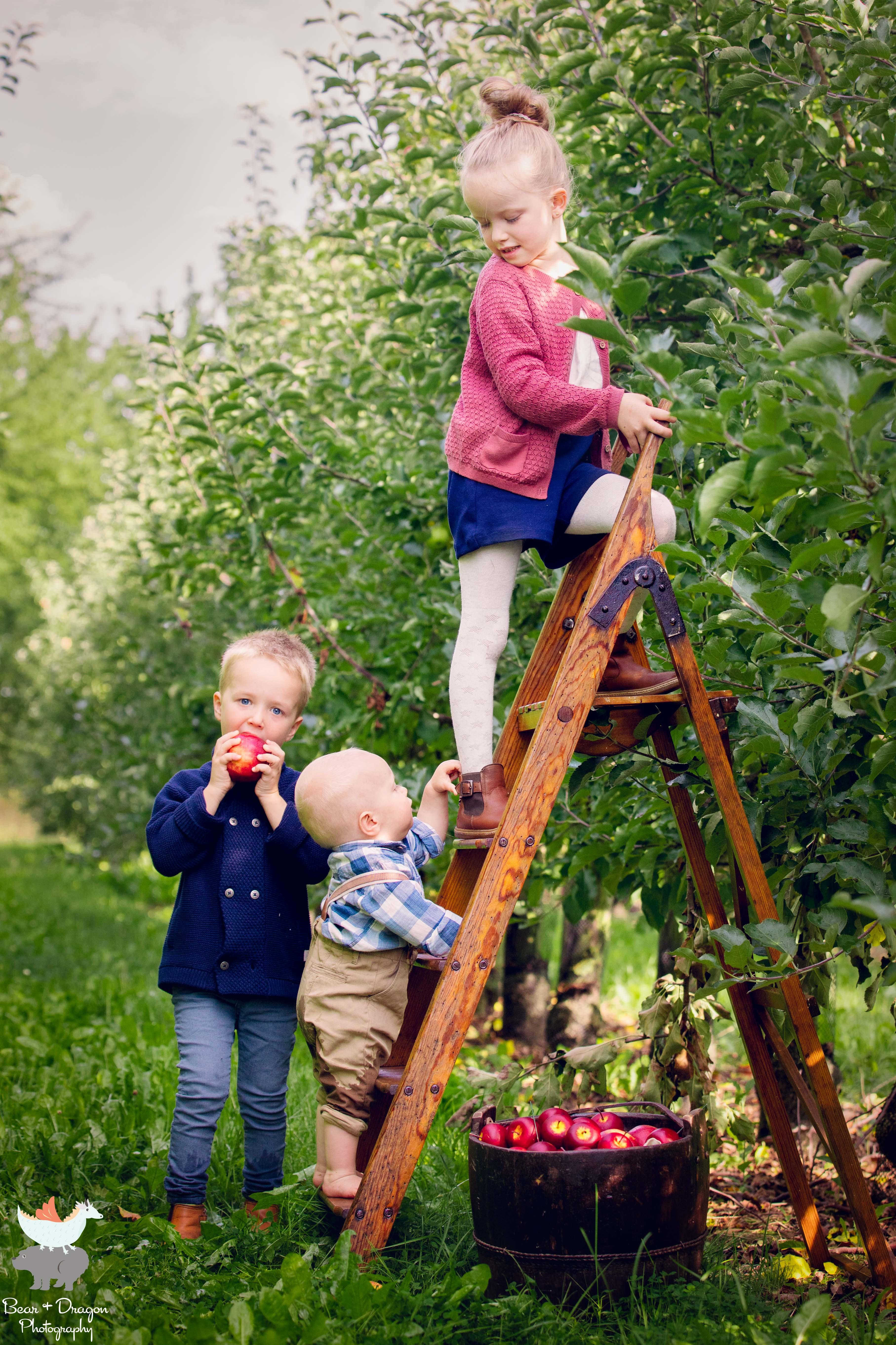 Apple Harvest Blog-14