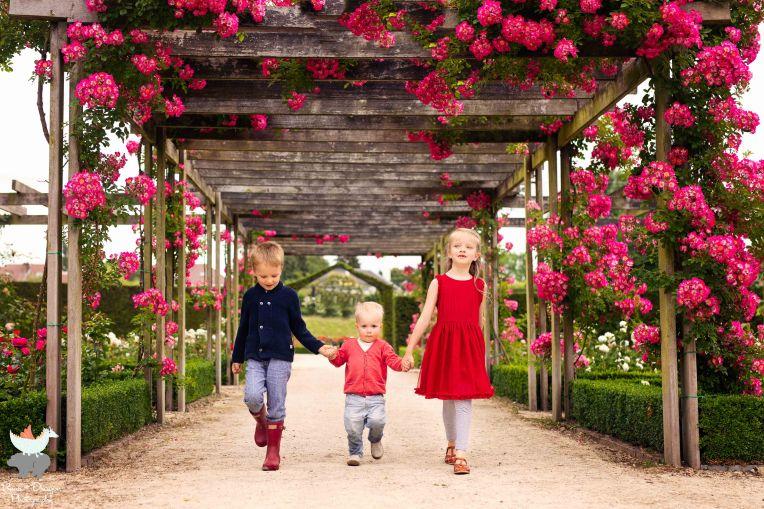 Adventures in the rose garden blog-15