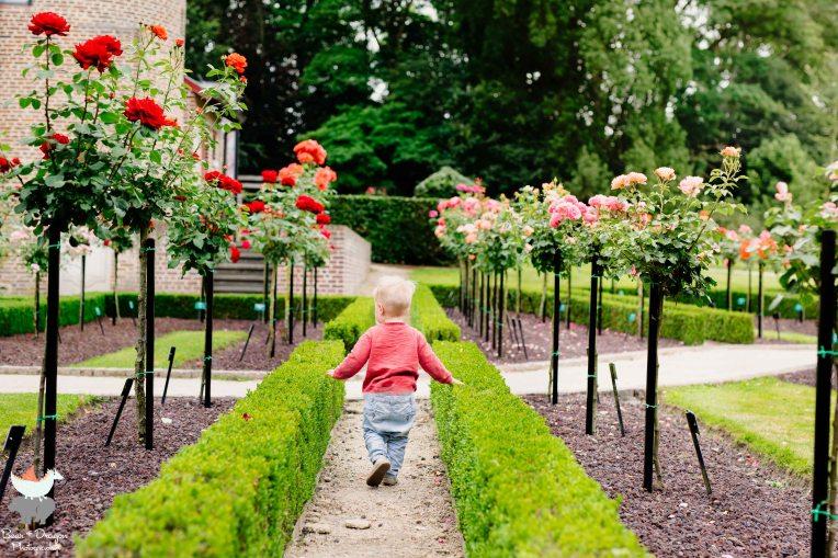 Adventures in the rose garden blog-4